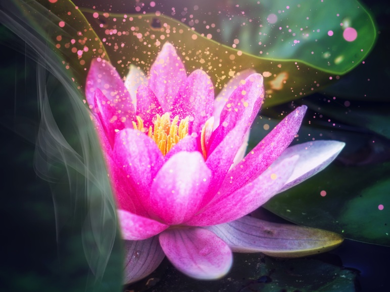 lotus flower, the power of YOU